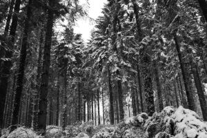In the Pines II by TheEnglishSummer