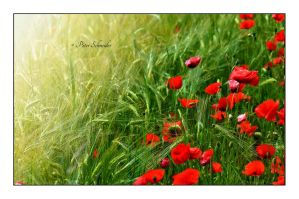 Red hem by Phototubby
