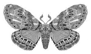 Moth II by Haluzz