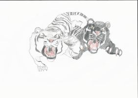 The Twin Tigers by FariOwl