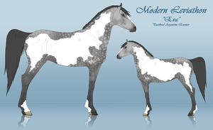 Modern Leviathon: Argentine Eventer by horsy1050