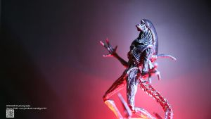 S.H.  Monster Arts Alien Warrior Xenomorph Review by Digger318