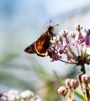 Skipper by DaisyDinkle