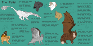 Felist species ref sheet by cat-women2
