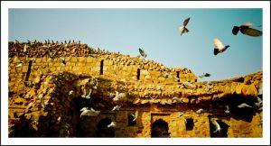 flight in the fort by sanwahi