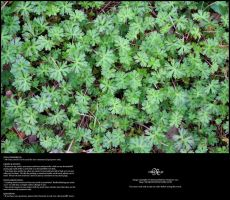 Ground Plants 01 by Neyjour