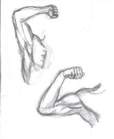 Arm Muscles Study by mmawolf