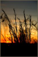 Sunset Grass by explicitly