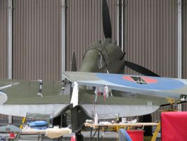 p40 hiding at the back,duxford  TFC,hanger by Sceptre63