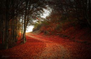 Light in the autumn forest by valiunic