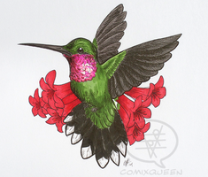 Birthday Hummingbird by comixqueen