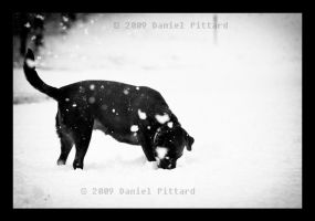 Lexi in the Snow 2 by dspittard