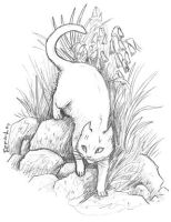 Cat in garden, and a new blog by emla