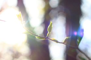 Bud and Sun Light by Mulsivaas