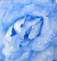 Blue Rose by concettasdesigns