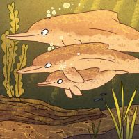 pink river dolphins by asmithart