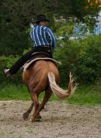 Palomino spinning by silver-spurs
