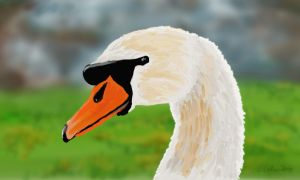 Swan Head by TheBigDaveC