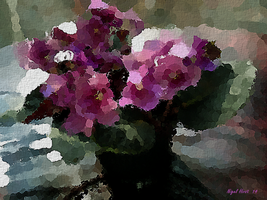 African Violets by Nigel-Hirst