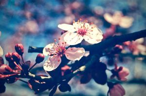 Spring Blossom by MiaLeePhotography