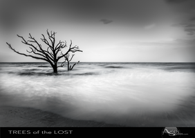 Trees of the Lost No. 1 by AugenStudios