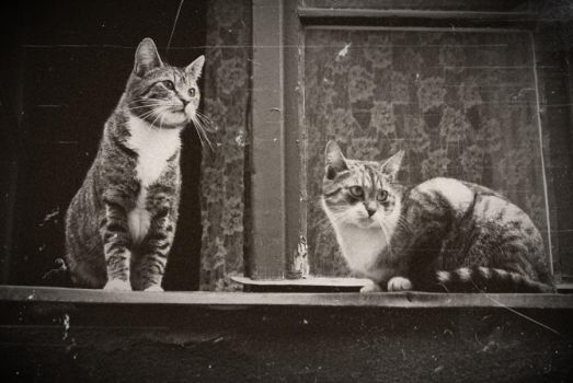 The cat gang by borderone