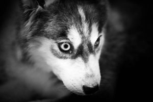 The Eyes Of The Wolf by F2E-87-Jeddah