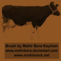Cow - Inek - Photoshop Brushes by RockID