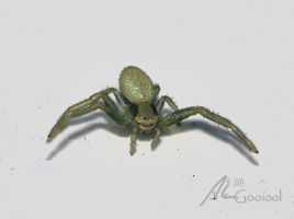 Crab Spider by Gooiool