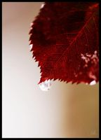 Red drop by ivakka