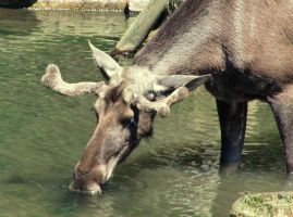 Thirsty by lordfreedom