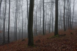 Foggy Forest 17 by sacral-stock