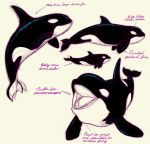 Orca Study by dreamwatcher7