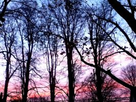 Sunset through the trees by Michies-Photographyy