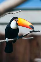 Tucan by Piddling