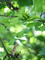 Leaves 01 by LithiumStock