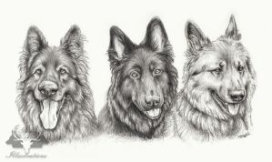 Zac, Bella and Curly Portrait by Gaia-Illustrations