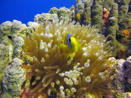 L'aquarium or Red Sea by scubapic