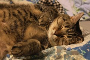 Let Sleeping Cats Lie (Because They're Cute) by juliekswenson