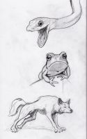 Animal sketches by jEROMEaNIMATIONS
