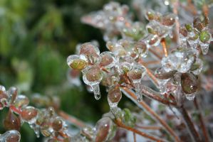 Frozen Leaves by wolfphotography