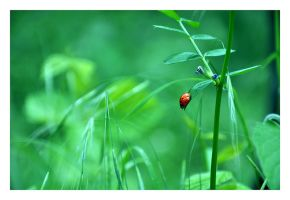 lady bug by arevook