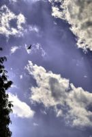 Bird in the sky HDR by Luks85