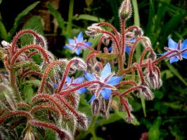 blue flowers by Arzhael71