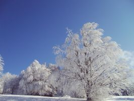 Winter 2008-2-trees by shmatity