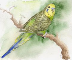 Parrot by nagettebost