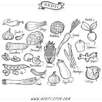 Vegetables Hand Drawn Clipart by Nedti by Nedti
