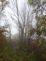 Swamp in the fog by A1Z2E3R
