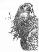Eagle drawing by SUBICstevan