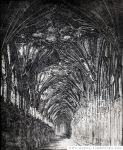 Etching. The catedral inside. by Metulji